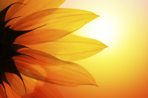 Bioenergie bezeichnet die universelle Lebensenergie, die jeden Organismus durchströmt.